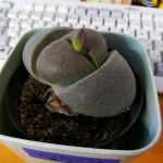 世にも奇妙な植物