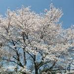関市河合町 店舗改修リフォーム (石原)