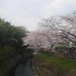 お花見もかねて、犬山祭りに行ってきました。