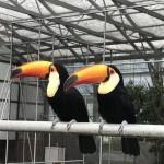 愛する鳥たち