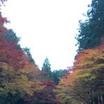 紅葉狩に行ってきました